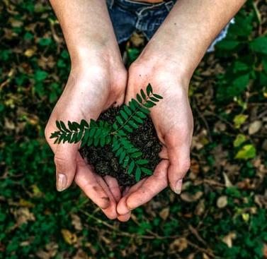 plant in hand environment friendly noah-buscher-unsplash